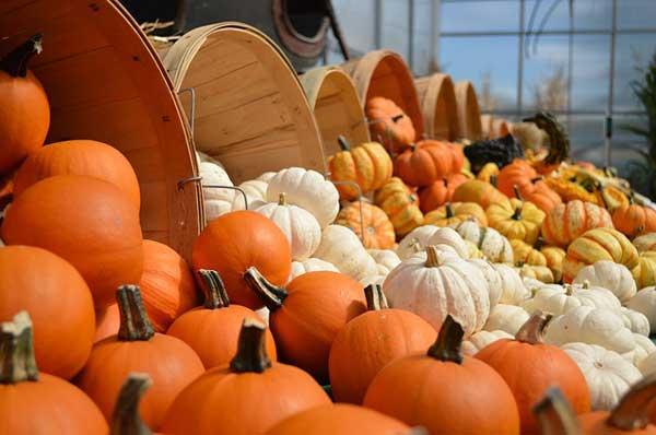 Kürbisse - die Basis für wunderbare Herbstgerichte